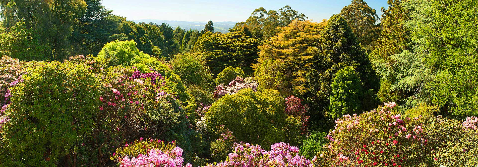 Dandenong Ranges Spring Gardens at Woolrich